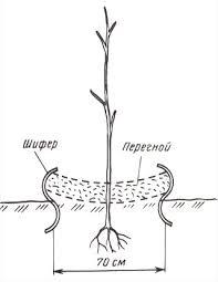 подземный забор для малины - podzemnyj zabor dlya maliny