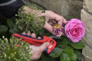 Увядшие цветки роз