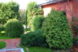 озеленение участков кустарниками