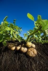 основные принципы и методы ведения органического земледелия