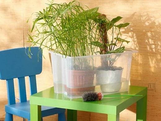 правила полива комнатных растений - pravila poliva komnatnykh rastenij