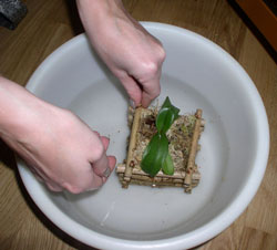 способ полива растений - sposob poliva rastenij