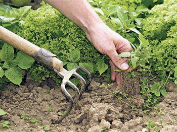 борьба с травой и сорняками _ borba_s_travoj_i_sornyakami