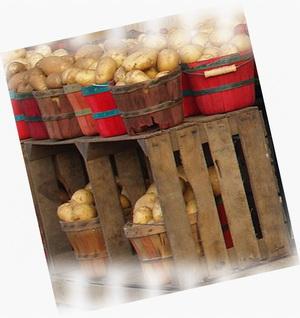 как сохранить картошку зимой - kak_sokhranit_kartoshku_zimoj