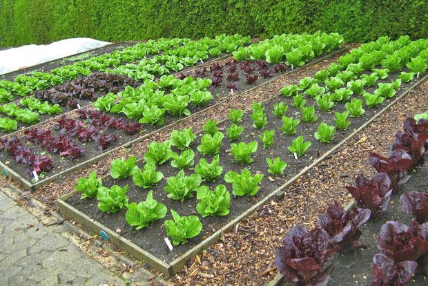 Как посадить огород что где
