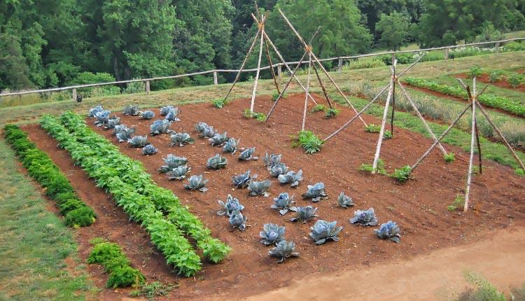 Огород традиционный фото