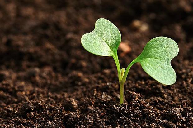 Плодородие почвы на своем участке