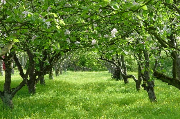 Садовые работы в мае на даче - sadovye raboty v mae na dache