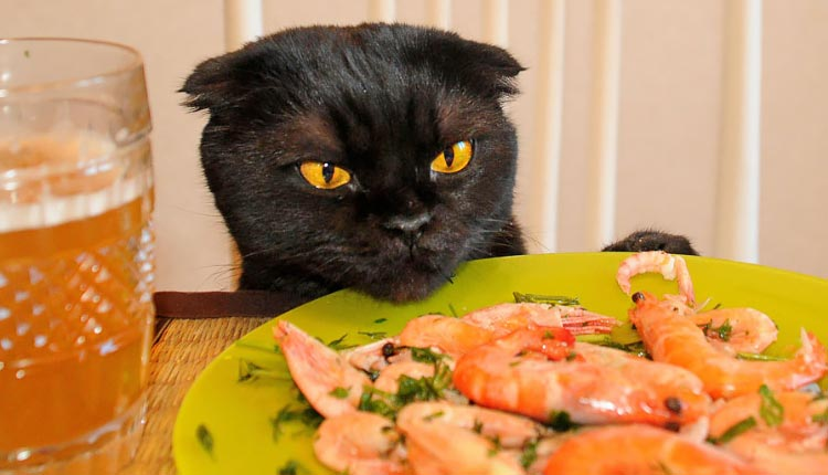 Приучаем кошку к домашней еде доводы в пользу здорового питания