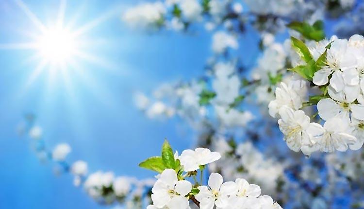 Уход за многолетними цветами в мае