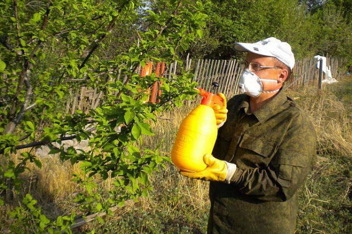 Раствор для защиты плодовых деревьев