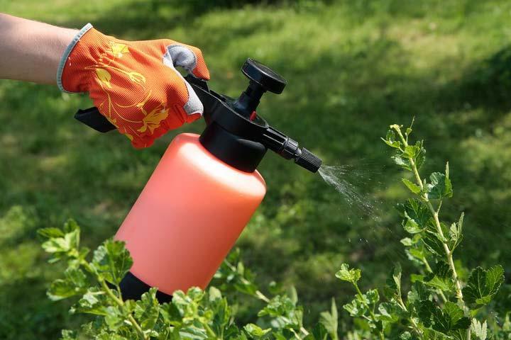 Раствор для защиты ягодников